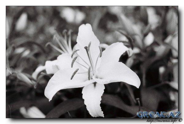 Черно-белые фотки...