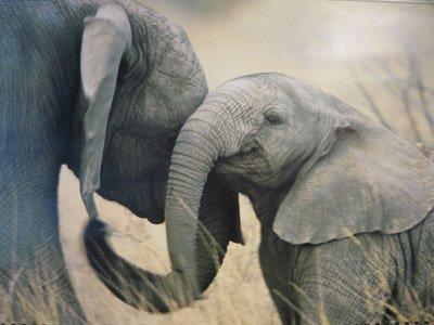 Учимся понимать язык животных