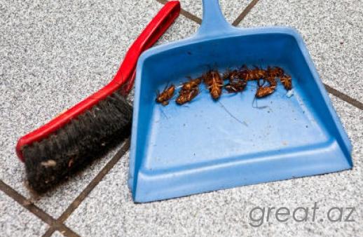 Описание: b Как избавиться от тараканов навсегда.