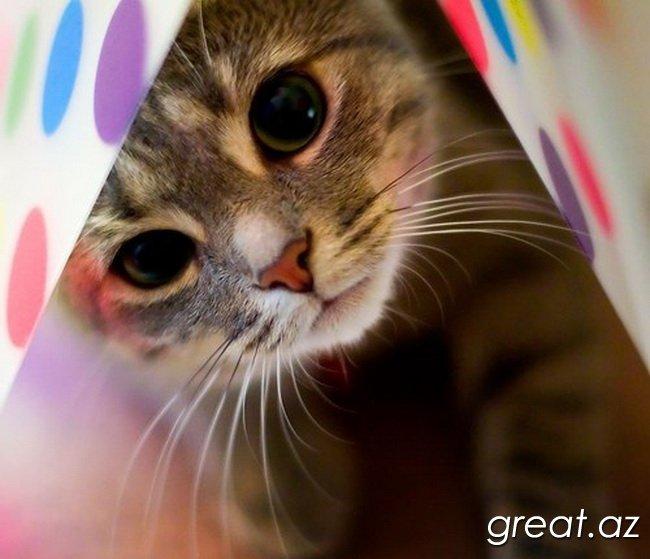 Как вывести кошек