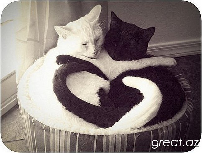 http://great.az/uploads/posts/2013-07/1373451453_krasiviye-kartinki_079.jpg