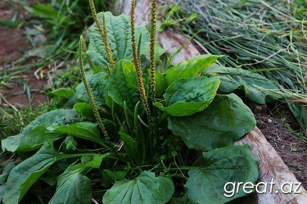 зеленый чай для похудения отзывы врачей