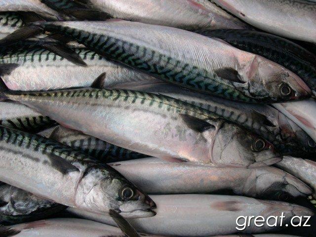 Ən faydalı hansı dəniz balığıdır