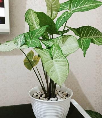 Bitkilər, hansılar ki, xeyirin maksimumunu gətirirlər və qayğının minimumu tələb edirlər