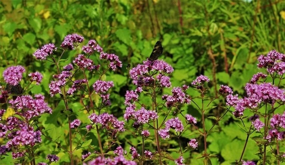 Сушеные лекарственные травы: самые полезные и эффективные