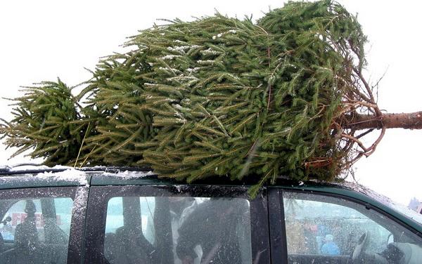 Что сделать, чтобы новогодняя елка простояла дольше